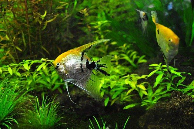 rybky a zeleň v akváriu