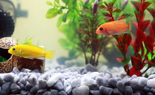čísté akvárium