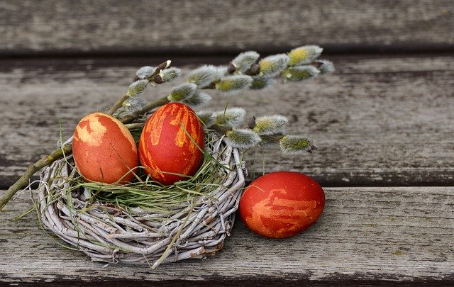 hnízdo s vejci