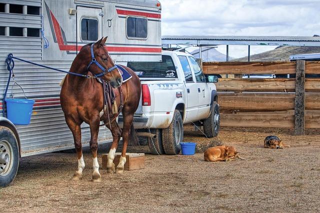 Americký venkov s koněm